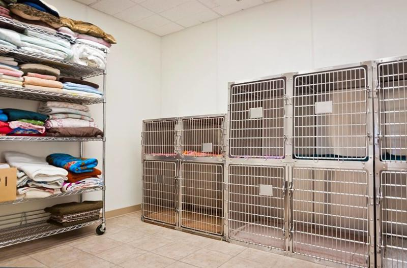 The kennel room is where we house all of our patients who are not contagious to others. We have 2 small kennels, 4 medium size kennels and 2 large kennels. Each pet has their own comfortable blanket and space to feel safe and secure. - Warman Veterinary Clinic