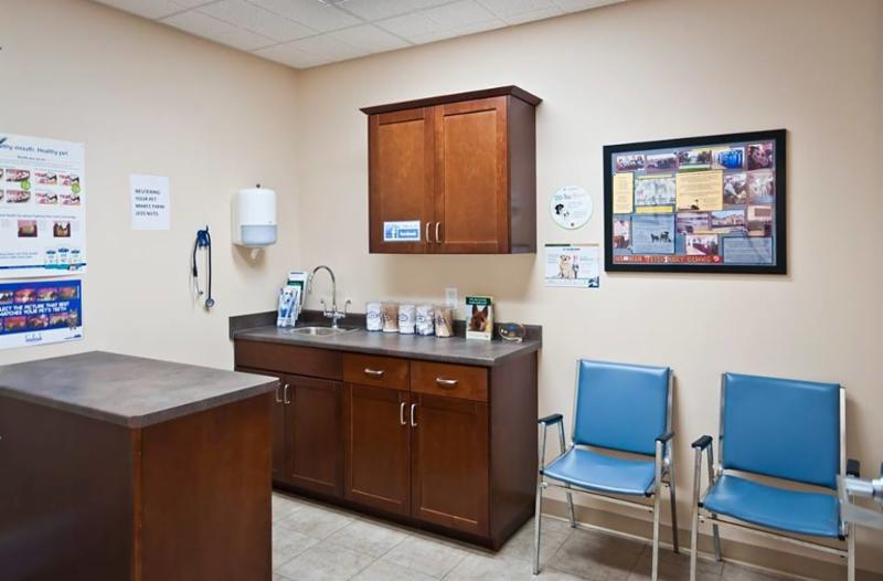Exam Room 4 is our largest room. We love that it can accommodate big dogs and big families! - Warman Veterinary Clinic