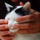 Les Grands Versants - Pet Care Services - 819-362-5434