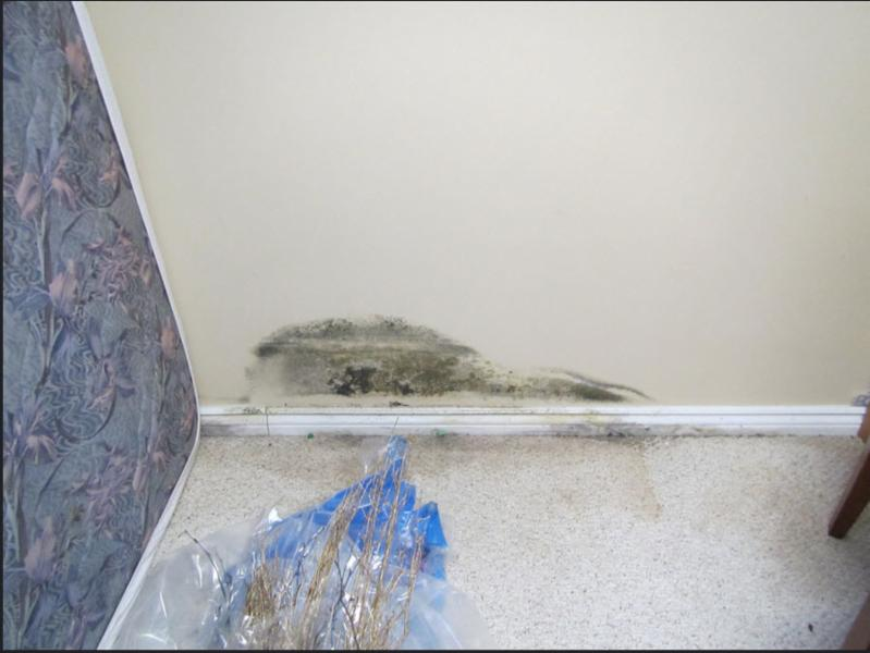 Ontario Mould Specialists Ltd - Photo 4
