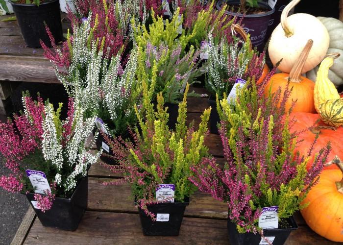GardenWorks - Photo 2