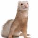 Royal Oak Pet Clinic - Pet Food & Supply Stores - 250-727-0003