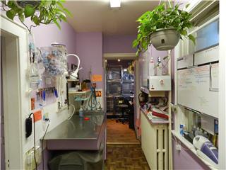 King Animal Clinic - Photo 11
