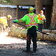 Royal Wood Tree Care - Tree Service - 604-916-6187