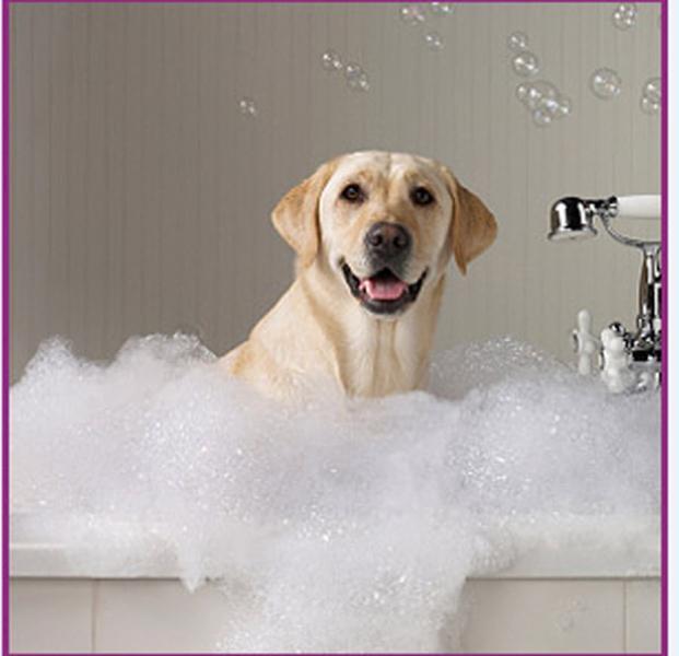 Dog City Grooming - Photo 2