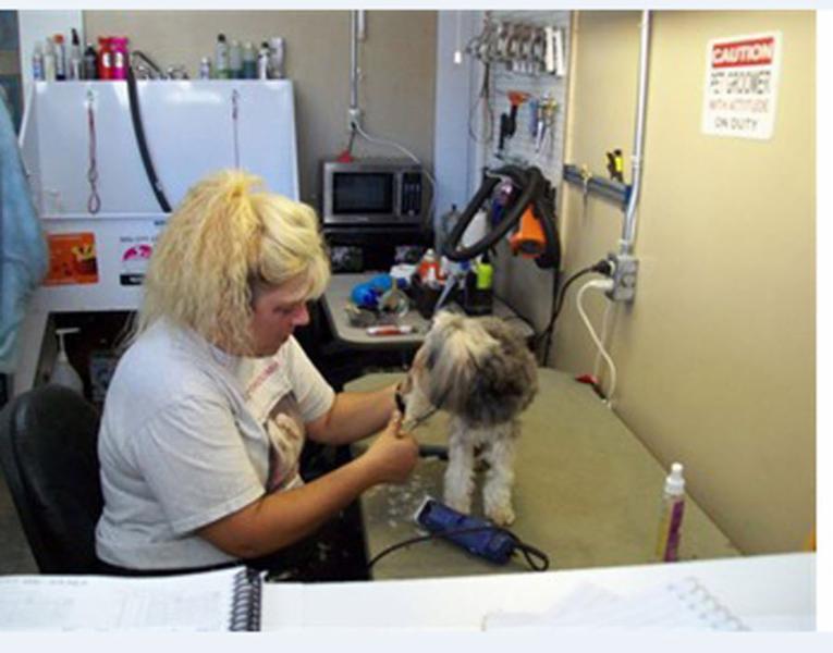 Dog City Grooming - Photo 3