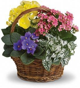 Passmore's Flowers - Photo 2