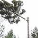 Above & Beyond Tree Service - Landscape Contractors & Designers - 250-703-0371