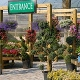 Johnston's Greenhouse - Florists & Flower Shops - 705-745-3042