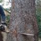 Bowthorpe Tree Services - Tree Service - 613-294-8377