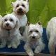 Barking Beauties Pet Spaw - Pet Grooming, Clipping, & Washing - 709-368-2233