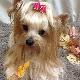 Barking Beauties Pet Spaw - Pet Care Services - 709-368-2233