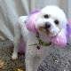 Barking Beauties Pet Spaw - Pet Grooming, Clipping, & Washing - 709-368-2233