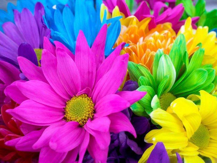 Heartlake Florist & Gifts - Photo 4