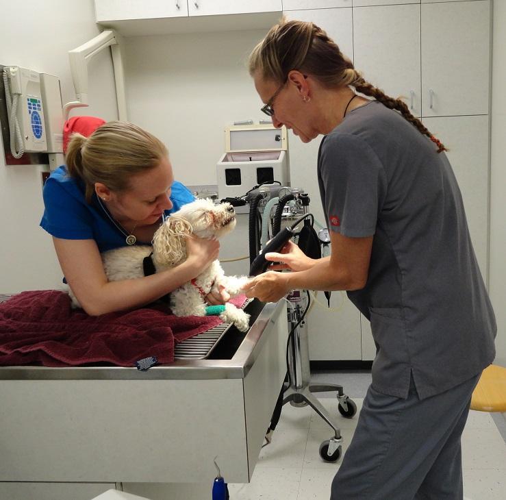 Brentwood Animal Hospital - Photo 5