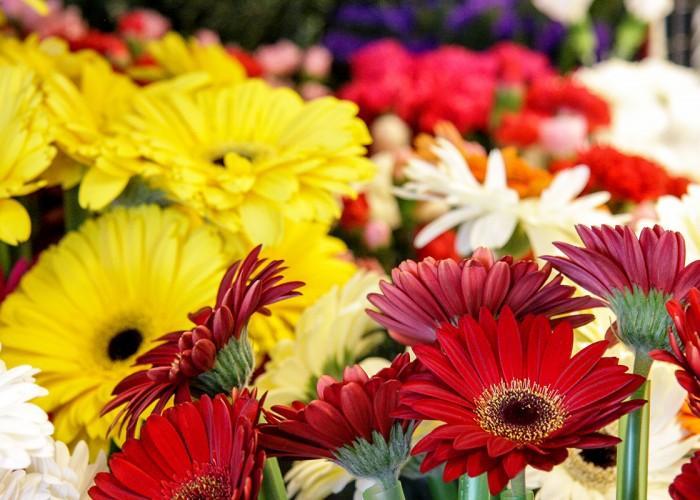 Flower Gallery - Photo 4