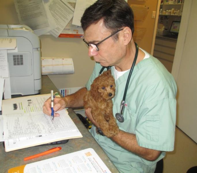 Anderson Animal Hospital - Photo 10