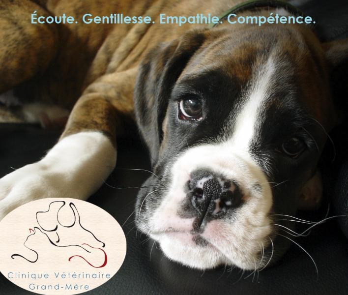 Clinique Vétérinaire Grand-Mère - Photo 6