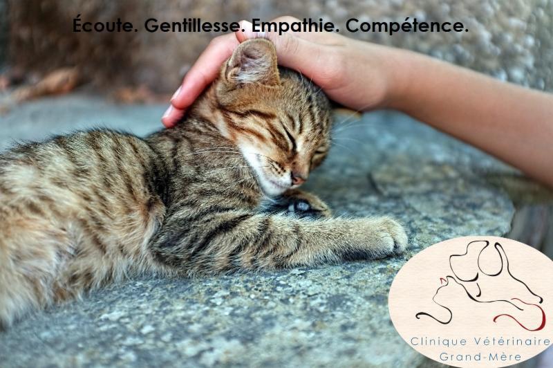 Clinique Vétérinaire Grand-Mère - Photo 8