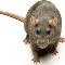 Aggressive Pest Control Ltd - Pest Control Services - 604-466-5193