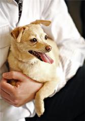 Clinique Vétérinaire De L'Outaouais - Photo 6