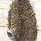 ICE Pest Control & Wildlife - Pest Control Services - 416-246-2256