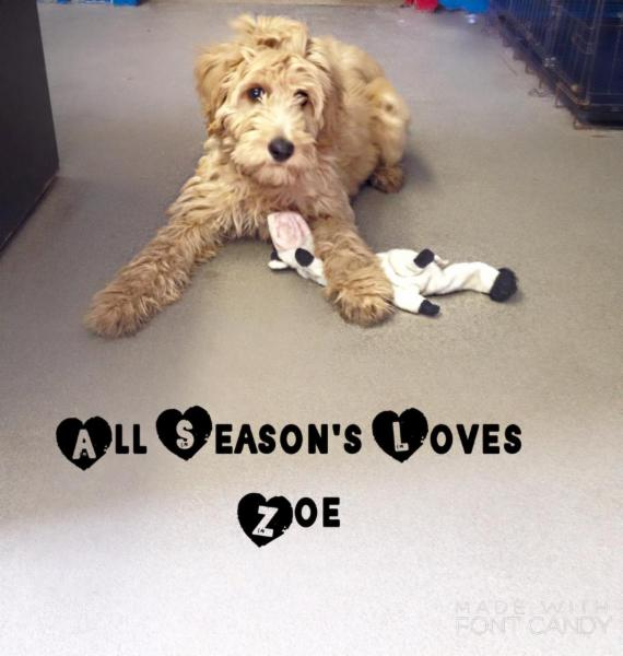 All Seasons Kennels - Photo 6