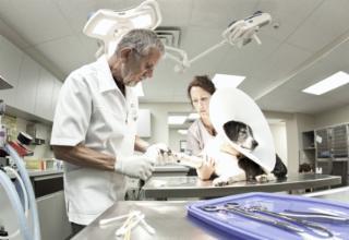 Hôpital Vétérinaire Du Plateau - Photo 9
