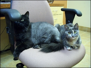 Guildcrest Cat Hospital - Photo 3