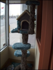 Guildcrest Cat Hospital - Photo 4
