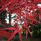 Vineland Nurseries - Nurseries & Tree Growers - 905-562-4836