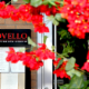 Novello - Restaurants - 450-449-7227