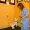 Royal York Animal Hospital - Pet Grooming, Clipping, & Washing - 416-231-9293