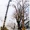 Landgraff Tree Service - Tree Service - 519-945-4385