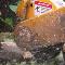 Arbocoiffe Inc - Conseillers en arbres - 418-842-6339