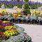 Vandermeer Nursery Ltd - Garden Centres - 905-427-2525