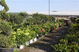 Vandermeer Nursery Ltd - Photo 5