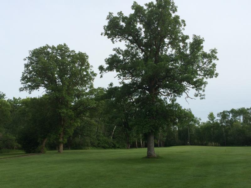 Treherne Delahunt Golf & Country Club - Photo 6