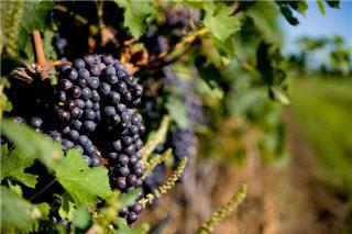 Rockway Glen Golf Course & Winery - Photo 5