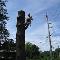 Arboriculture Lapointe - Service d'entretien d'arbres - 450-602-4386