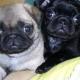 Austin Animal Hospital Ltd - Pet Food & Supply Stores - 604-931-7525