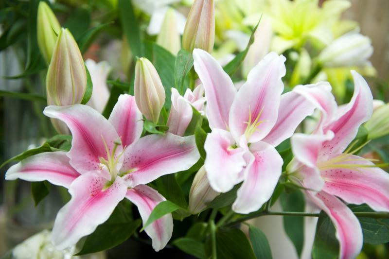 Florateria - Photo 40