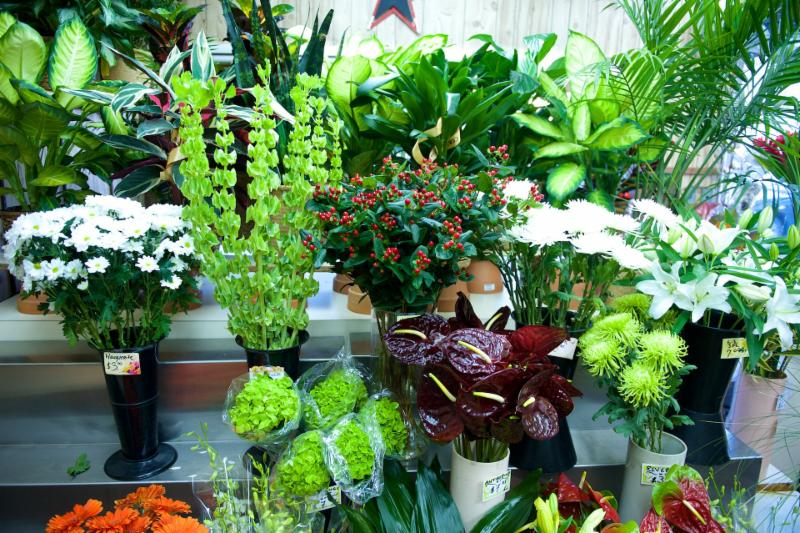 Florateria - Photo 6