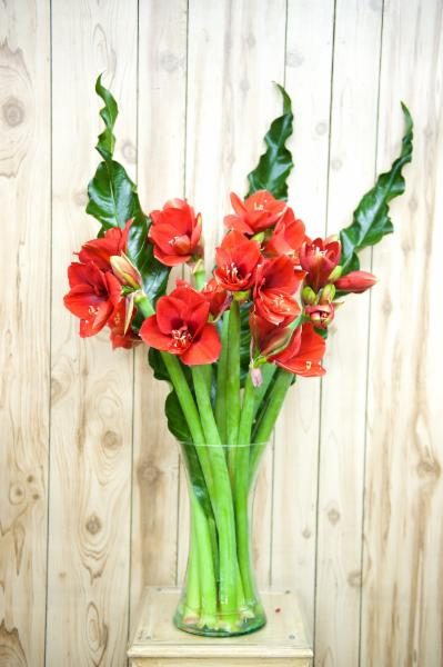 Florateria - Photo 48