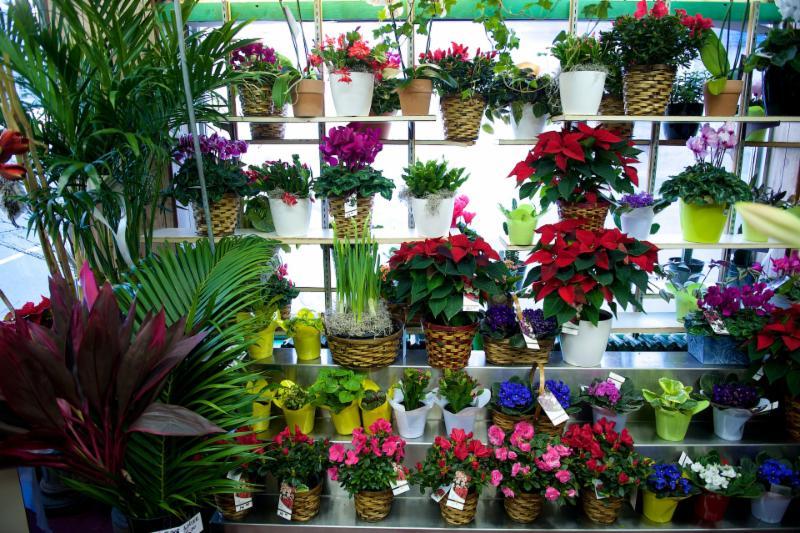 Florateria - Photo 7