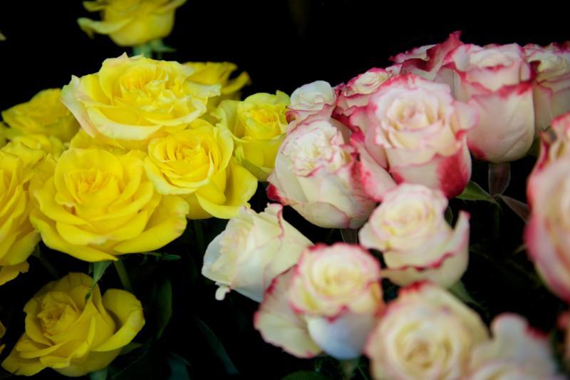 Florateria - Photo 76