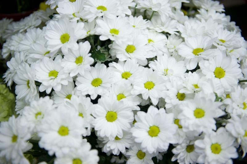 Florateria - Photo 42