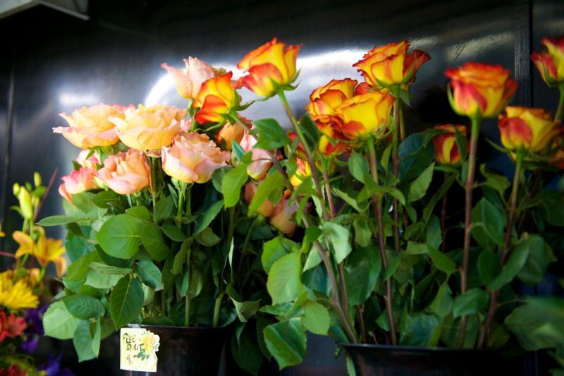 Florateria - Photo 73