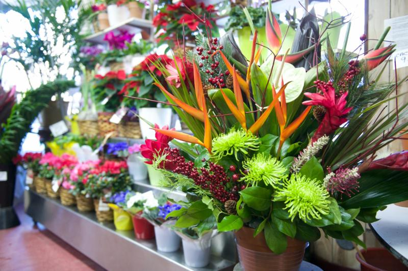 Florateria - Photo 50