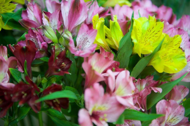 Florateria - Photo 92